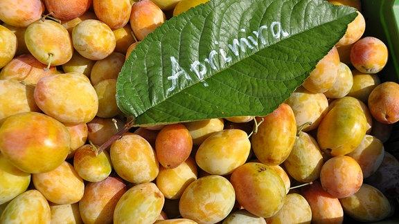 Blick auf zahlreiche gelbe Früchte. Darauf liegt ein grünes Laubblatt auf dem steht: Aprimira.