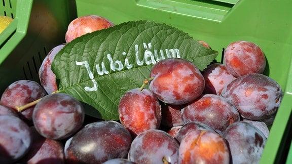 Lila Früchte in einer grünen Kiste mit einem grünen Laubblatt.