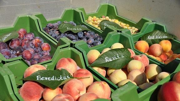 Blick auf Kisten mit Obst, die dicht beieinander stehen.