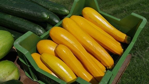 In einer grünen Kiste liegen gelbe Zucchini. Daneben sind weitere grüne Früchte zu sehen.