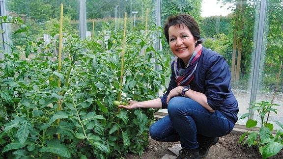 """MDR Garten-Moderatorin Claudia Look-Hirnschal hockt in einem Gewächshaus im egapark Erfurt neben einer Tomatenpflanze der Aktion """"Das dickste Ding"""" von MDR um 4"""