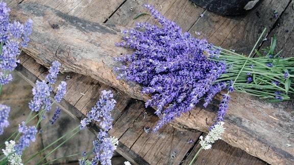 Ein Strauß mit abgeschnittenen, lila-blauen Lavendel-Blüten liegt auf einem Holzbrett, davor ragen weitere Lavendel-Blüten in den Farben Helllila und Weiß auf