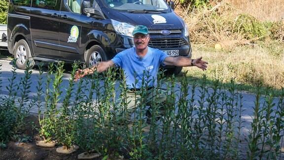 Super Liguster: Heckenpflanze für Vögel und Bienen | MDR.DE #XG_03