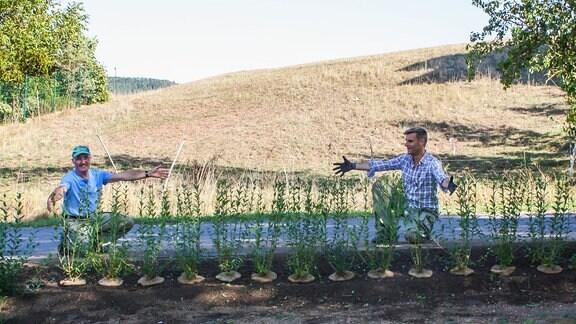 Zwei Männer hocken mit ausgebreiteten Armen hinter einer Hecke mit frisch gepflanzten Liguster-Sträuchern