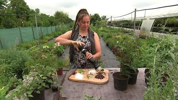 Paula-Uhlig - Kräutergärtnerin Paula Uhlig aus Erfurt erklärt Gewürzpflanzen