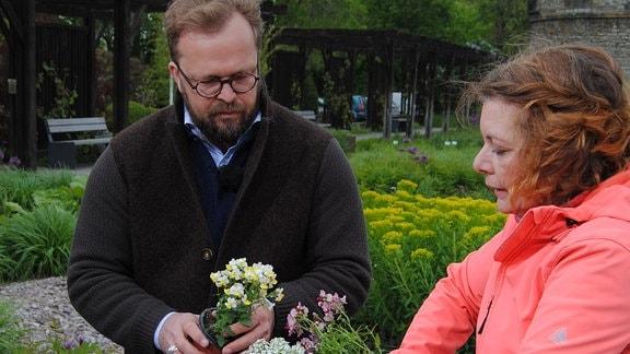 Balkonkübel wird mit duftenden Blumen bepflanzt