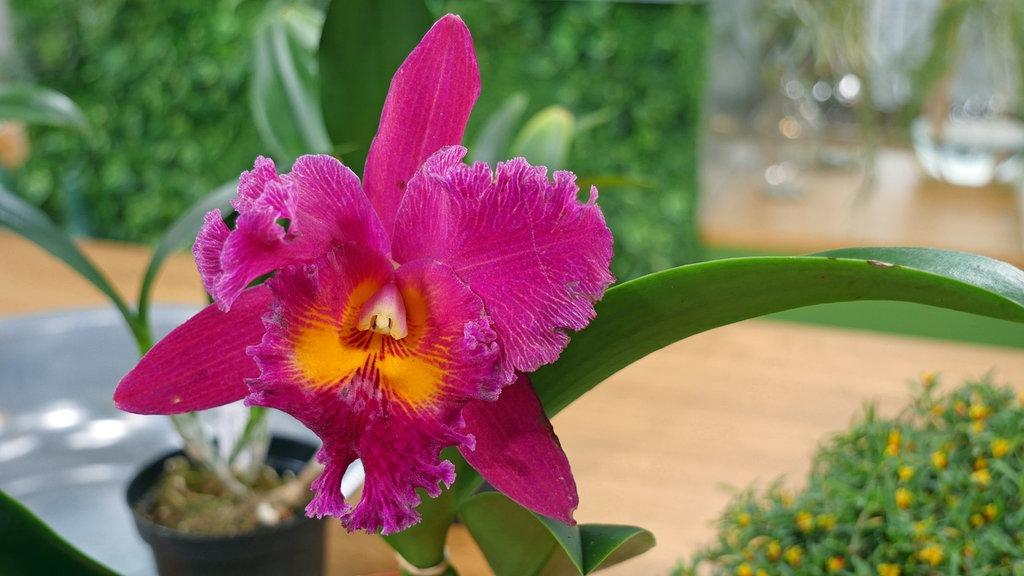 Orchideen Basiswissen Kurz Zusammengefasst Mdr De