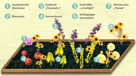 Pflanzplan für ein Staudenbeet, das vom Sommer bis zum späten Herbst bunt blüht