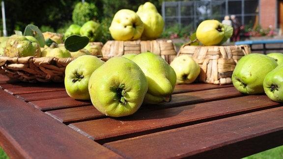 Gelb-grüne Quitten liegen auf einem Holztisch. Einige liegen in geflochtenen Schalen, andere auf umgedrehten Körben, weitere Quitten liegen unmittelbar auf dem Tisch.