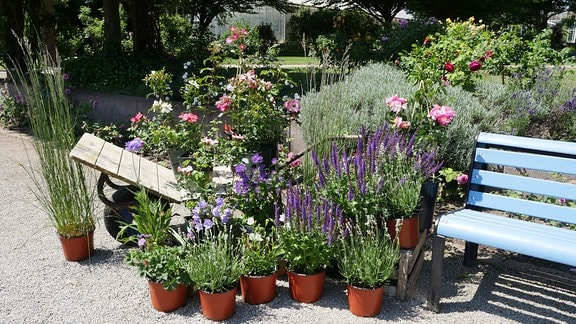 Mehrere Töpfe mit Pflanzen vor einer Schubkarre