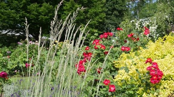 Hohes Ziergras vor einem Gartenhintergrund