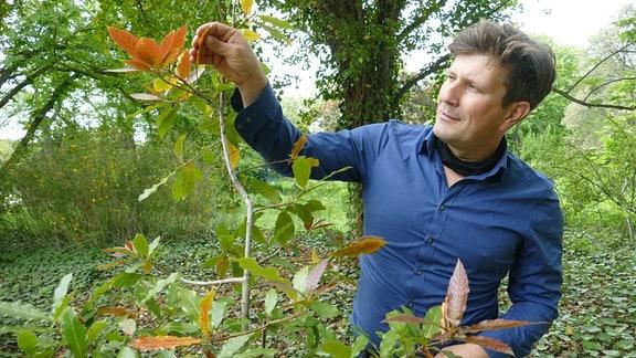 Prof. Reif mit einer Texanischen immergrünen Eiche im Arboretum an der Fachhochschule