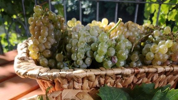 Rote und weiße Weintrauben liegen in Strohschalen.