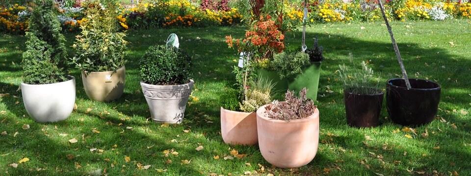 Verschiedene Kübel Mit Winterharten Pflanzen Stehen Auf Einer Wiese