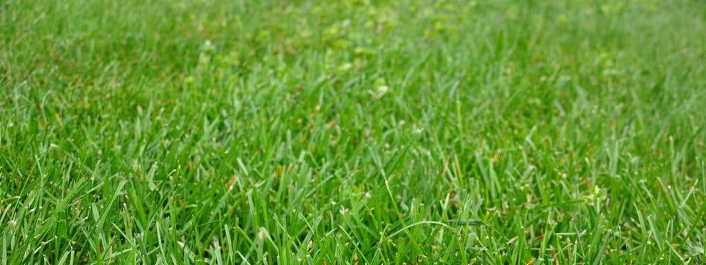 Rasen Anlegen Düngen Und Richtig Pflegen Mdrde