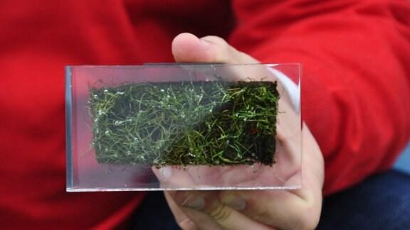 Eine Hand hält ein viereckiges Glasstück, in dem ein kleines Stück Rasen mit Erde konserviert wurde.
