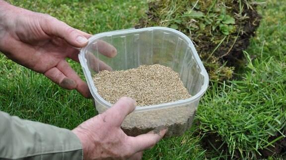 Zwei Hände halten eine eine durchsichtige Plastikschale mit beigem Samen.
