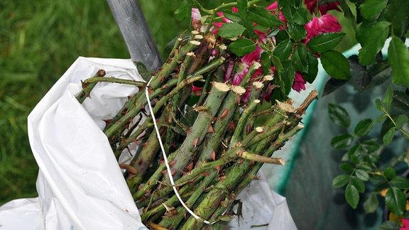 Aus einem Plastiksack schauen Enden von Rosenstielen heraus. Sie sind zusammengebunden.