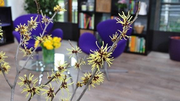 Zweige mit gelben Blüten, im Hintergrund sind unscharf zwei lilafarbene Sessel und ein Galstisch mit einem gelben Blumenstrauß zu sehen
