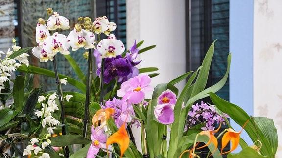 verschiedene Orchideen mit bunten Blüten