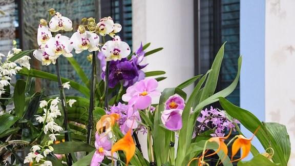 Orchideenpflege - Die fünf größten Irrtümer | MDR.DE