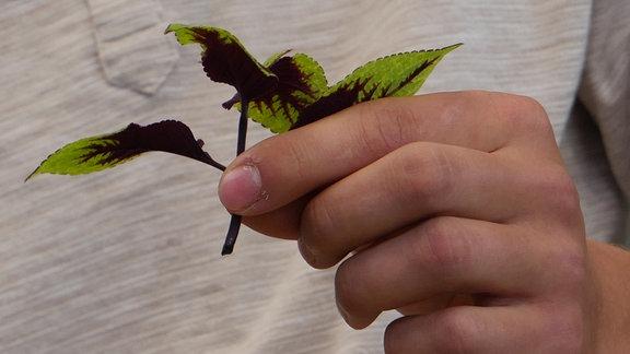 Eine Hand hält einen kleinen Zweig mit bunten Blättern.