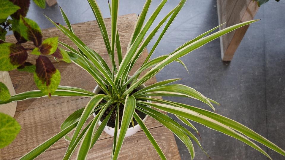 Diese Zimmerpflanzen verbessern die Luft | MDR.DE
