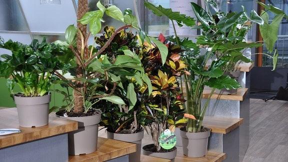 Verschiedene Zimmerpflanzen stehen auf einem Treppenpodest.