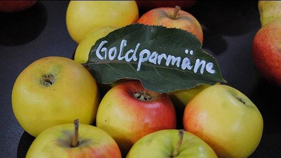 """Grün-rote Äpfel liegen auf einer dunklen Tischplatte mit einem grünen Blatt, auf dem """"Goldparmäne"""" geschrieben steht"""