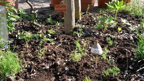 Mit Abstand gepflanzte Kräuter