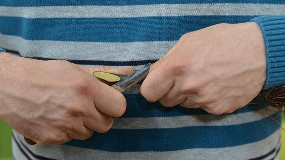 Mit Messer wird ein Trieb schräg angeschnitten