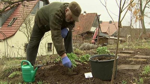 Mann pflanzt Stauden im Garten