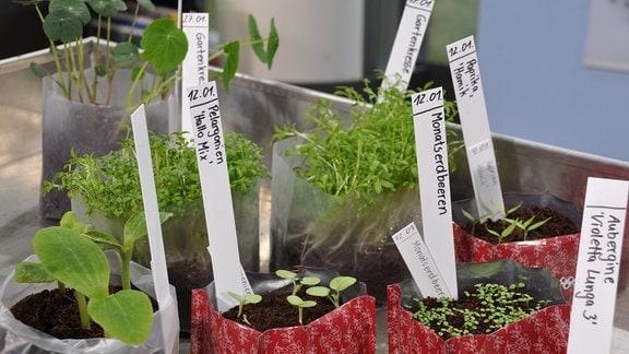 Auf einem silbernen Tisch stehen verschiedene Tüten mit Pflanzenerden und kleinen Pflänzchen.