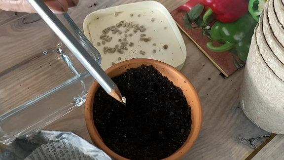 An einer Bleistiftspitze klebt ein Samen der in einen Topf gesteckt wird.