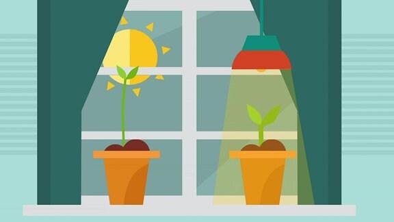 Pflanzenlicht für stärkere und robuste Sämlinge