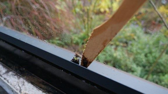 Schmutz in Kanten von Gewächshaus aus Glas