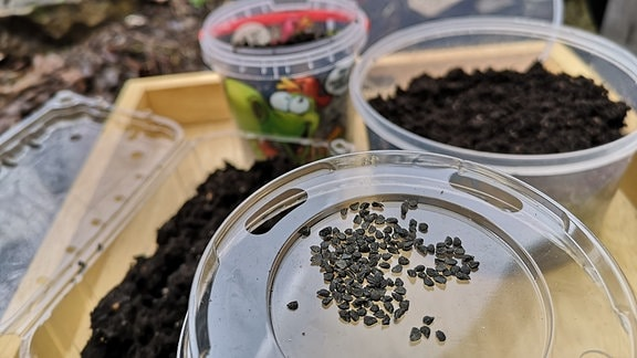 Pflanzensamen und mit Erde gefüllte Verpackungen aus Plastik