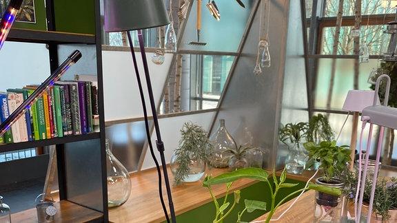 Höhenverstellbare Pflanzenlampe steckt in Blumentopf mit Pflanze