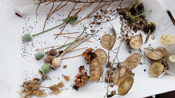 Verschiedene verblühte Blüten auf einem Tablett