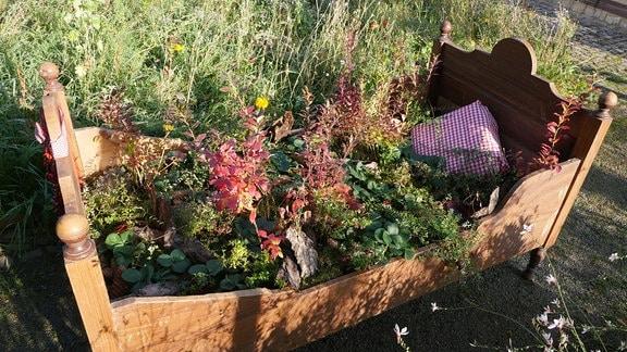 Ein mit Beeren-Obst bepflanztes Bett.