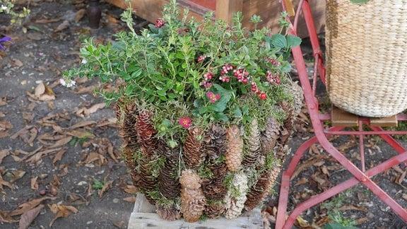 Preiselbeeren und Erdbeeren in einem mit Tannenzapfen und Moos dekorierten Blumentopf.