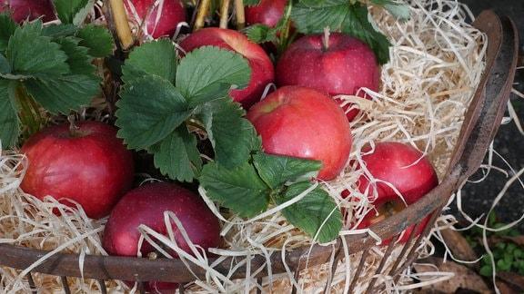 Erdbeere, Äpfel und Holzwolle in einem Wäschekorb.