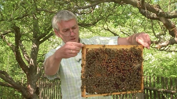 Imker Horst Jäger-Mang mit Bienen
