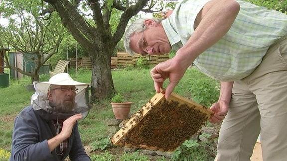 Imker Horst Jäger-Mang hält Wabe mit Bienen