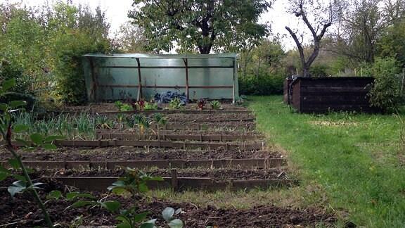 Terrassenbeete in einem Kleingarten - Blick auf ein Beet, das mit Holzstücken treppenartig angelegt ist. Darin wächst noch etwas Grün