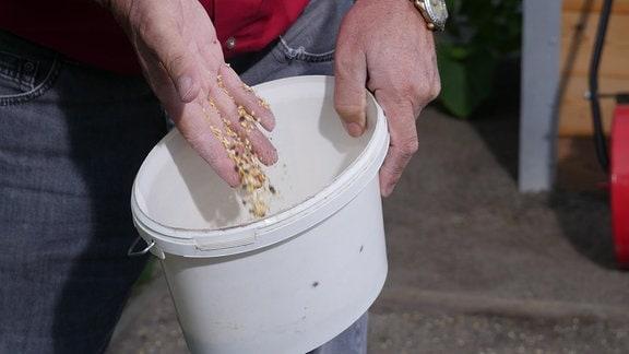 Eine Hand rührt Samen in einem Eimer um.