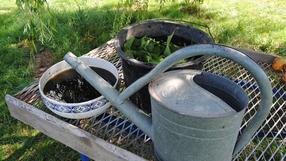 Beinwell-Jauche, Gießkanne und Beinwell-Pflanzen in Eimer mit Wasser