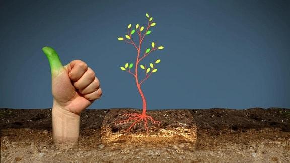 Grafik die eine Pflanze in einem Beet zeigt