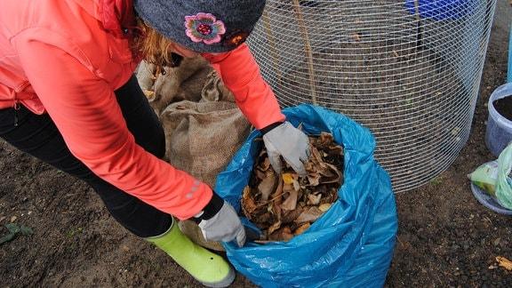 Eine Frau greift mit Gartenhandschuhen in einen blauen Plastiksack mit Herbstlaub darin