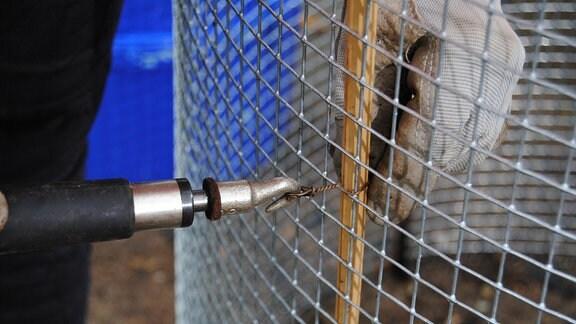 Engmaschiges, zu einem Zylinder geformtes Drahtgeflecht wird mit einem Stück Draht an einem in der Erde steckenden Bambusstab befestigt